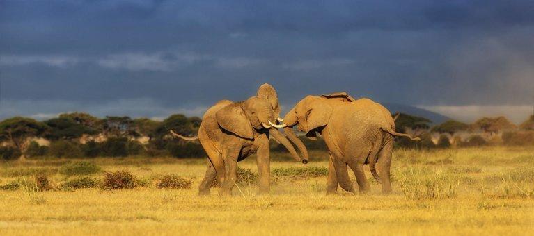 Kenya Safari Holidays, Tours, Packages & Prices