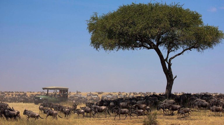 Kenya Safari Holidays, Tours, Packages & Prices