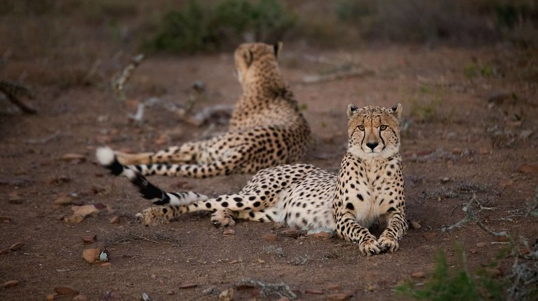 South Africa Safari Holidays (Packages + Pricing)