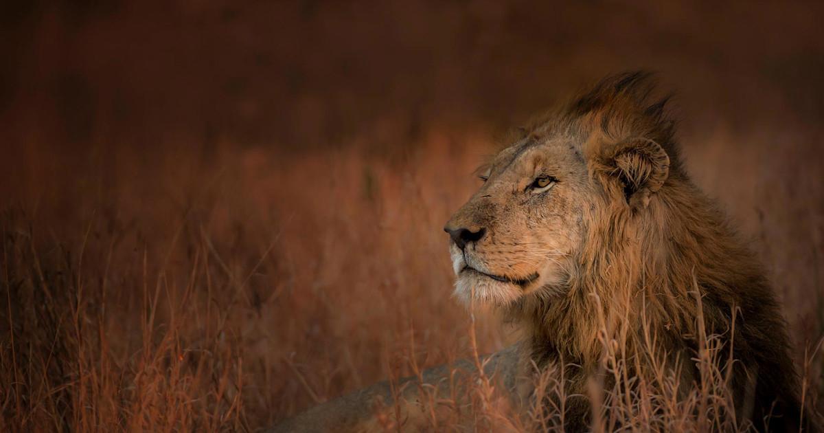 Big 5 Safari (Tours, Packages & Pricing) | Rhino Africa