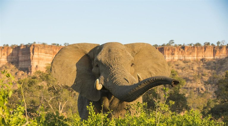 Zimbabwe Safari Holidays - Tours & Lodges | Rhino Africa