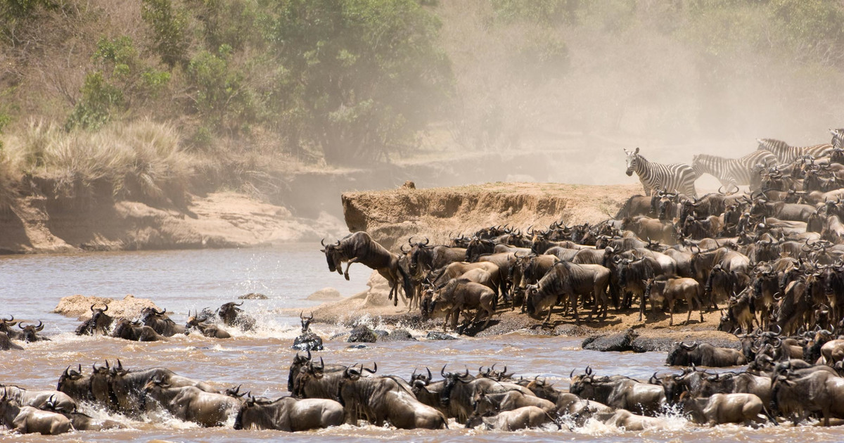 The Great wildebeest migration3