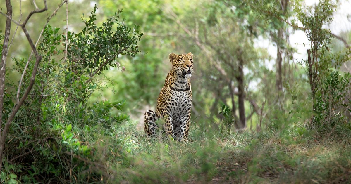 Sabi Sand Safari - Luxury African Safari | Rhino Africa